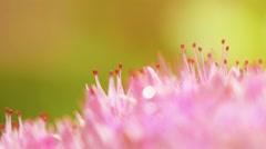 Macro shot of pink flower Stock Footage