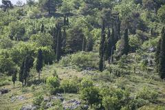 Cypress trees on a hill Stock Photos
