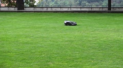 Robot Lawn Mower Stock Footage