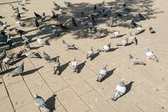 doves in the city - stock photo