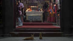 Cats looking at chinese temple,Surabaya,Java,Indonesia Stock Footage