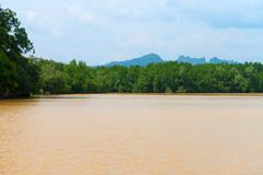Muddy, Brown River in a Wilderness Area of Krabi, Thailand Stock Photos