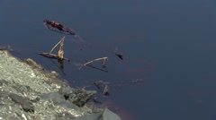 Dragonflies flying over oil spills Stock Footage