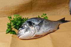 Large fish sea bream orata gutted - stock photo