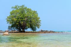 Lone Mangrove Tree in the Rocky Shallows of a Tropical Sea Stock Photos