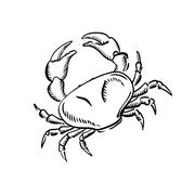 Marine crab with big claws, sketch Stock Illustration
