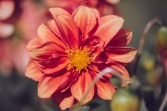 Beautiful colorful flower close-up Stock Photos