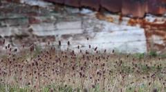 South Georgia weeds Stock Footage