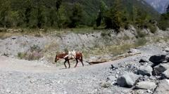 Horse pulling felled trees on the stone road. Azerbaijan. Stock Footage