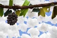 Paper grapes, Campo Maior, Portugal Stock Photos