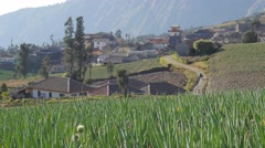 Man walking through onion fields with load,Cemoro Lawang,Java,Indonesia Stock Footage