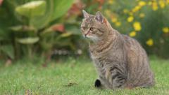 Cat in the garden hunting mice - no color grading Stock Footage