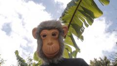 Man pops up wearing an ape mask with bananas - stock footage