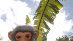 Stock Video Footage of Ape man pops up. The missing link