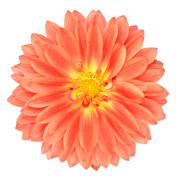 Red Pot Marigold Gerbera Flower Isolated on White Stock Photos