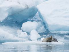 Glacial lake on the edge of Vatnajokull National Park. at the head of the Stock Photos