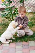 Little boy plays with a white puppy Labrador - stock photo