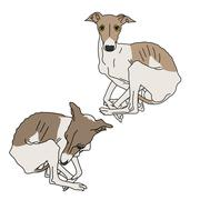 Illustration of two Italian greyhound spotted Stock Illustration
