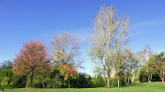 Autumn Trees and Blue Sky Stock Footage