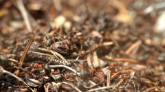 Universal vanity - anthill closeup Stock Footage