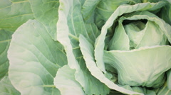 Green Cabbage - stock footage