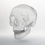 White polygonal skull on white studio background Stock Illustration