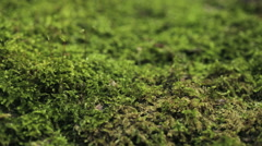 Green Moss - Dolly Shot Stock Footage