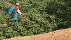 Potato Plantations Pokhara Stock Footage