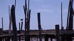 Seagull on top of old fishing port of wooden stakes Stock Footage