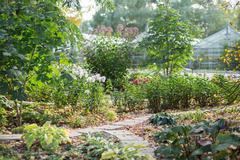 Stock Photo of Botanical garden