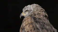 Eagle close up Stock Footage