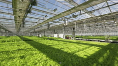 Large industrial greenhouses, green beds, people are working in the background Stock Footage
