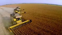 Four yellow combines harvested soybeans. Aerial shot - stock footage