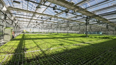 Large greenhouse. Green beds. Woman truck rolls with salad Stock Footage