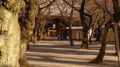 Yasukuni Temple, very famous politically significant shrine for Japanese WWII so Stock Footage