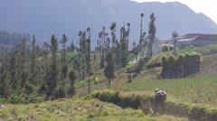 Woman cutting grass between onion fields,Cemoro Lawang,Java,Indonesia Stock Footage