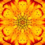 Yellow Concentric Flower Center Mandala Kaleidoscopic design Stock Photos