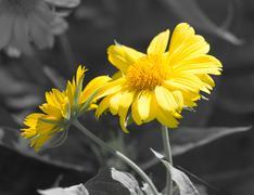 Stock Photo of beautiful yellow flower in nature
