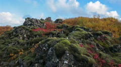 Colorful autumn fall moss volcanic rocks foliage timelapse clouds Iceland 4k Stock Footage