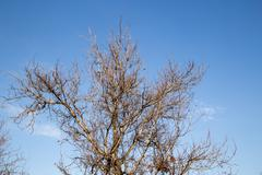 bare tree branches against the sky - stock photo