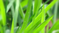 Stock Video Footage of green grass in a light blur closeup