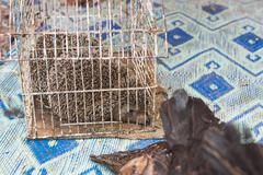 The porcupine in the cage wait for sell in the market Stock Photos