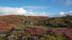 Colorful bright autumn fall moss volcanic rocks foliage timelapse Iceland low 4k - stock footage