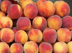 Big pale of fresh organic peaches fruit Stock Photos