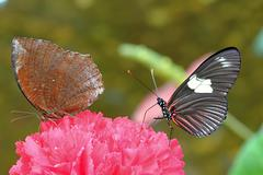 Colourful butterfly Stock Photos