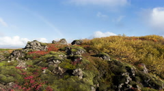 Colorful bright autumn fall rainbow moss volcanic rocks timelapse Iceland 4k - stock footage
