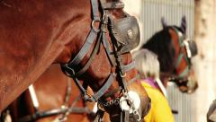 horse for touristic tours waiting with other horses and carriages in background - stock footage