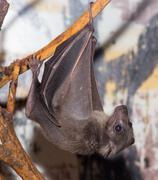 Bat at the zoo Kuvituskuvat
