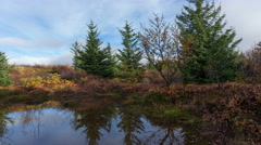Colorful autumn fall pine trees water reflection timelapse Iceland tundra pan 4k Stock Footage