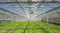 Large industrial greenhouses. Green beds. Shooting from height Stock Footage